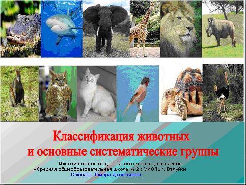 Конспект урока по биологии 7 класса на тему классификация животных и основные систематические группы.