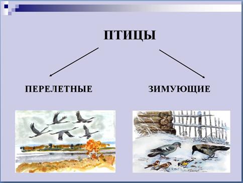 15 января - День зимующих птиц России (день рождения Евгения Носова).