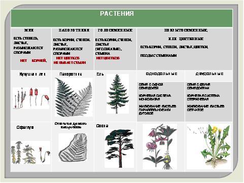 частей растений,