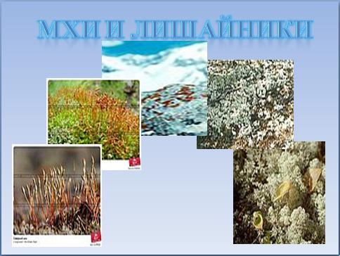 Дети получают наглядное представление об Арктике.  Презентация знакомит учащихся с существенными признаками природной...
