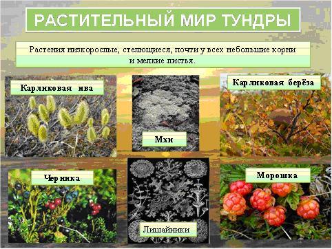 знакомство с растительным миром