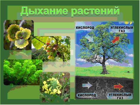 на дыхание растений.