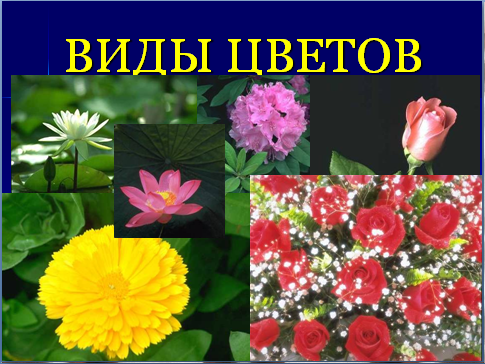 Презентация цветок