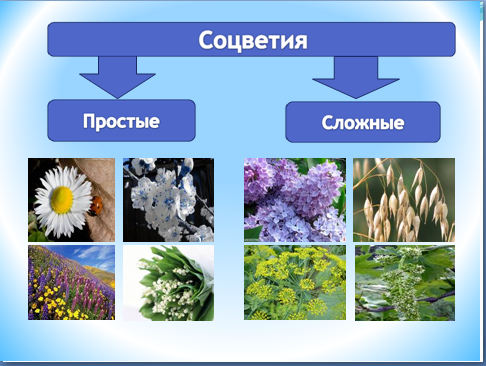 Соцветия – это группа