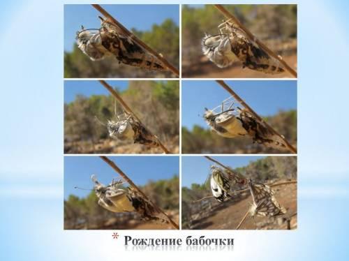 география насекомых