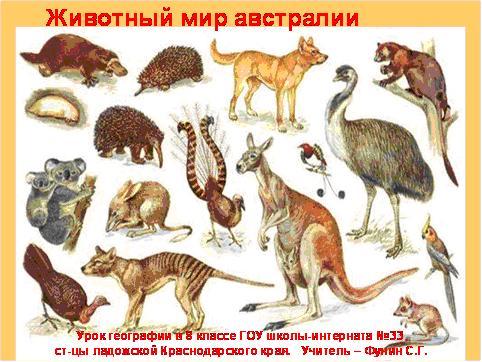 Презентация животный мир австралии