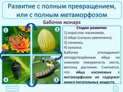 типов развития насекомых.