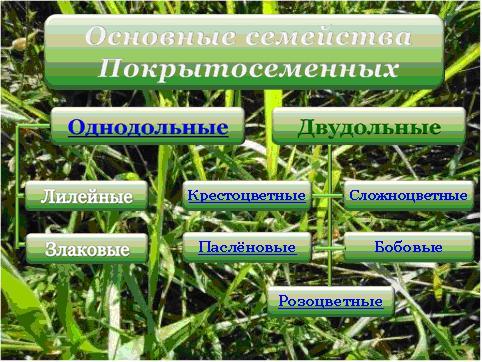краткое описание растений.