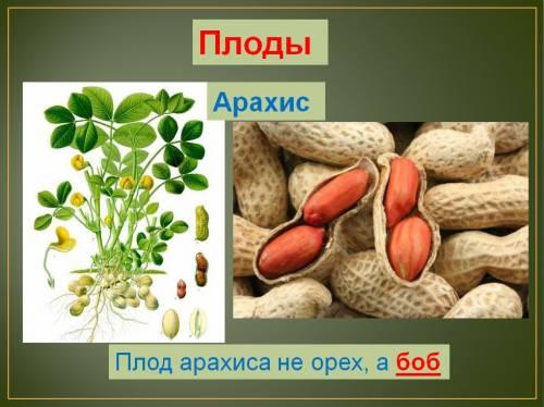 к распространению плодов и