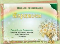 """Шаблоны презентаций """"Нарциссы"""""""