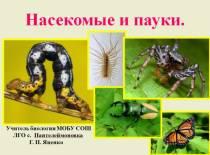 Презентация по биологии Насекомые и пауки