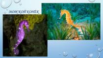 Презентация к занятию в детском саду Обитатели морей и океанов
