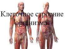 Клеточное строение организма