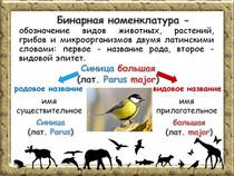 Влияние человека на животных