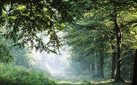 Таинственное очарование лесов